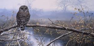 Autumn Mist - Barred Owl by John Seerey-Lester