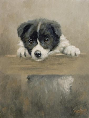 Border Collie Puppy on a Fence