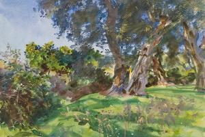 Olive Trees, Corfu by John Singer Sargent