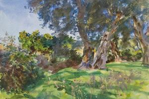 Olive Trees, Corfu by John Singer Sargent