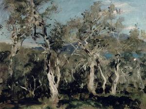 Olives, Corfu, 1912 by John Singer Sargent
