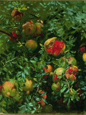 Pomegranates, Majorca, C.1908 by John Singer Sargent