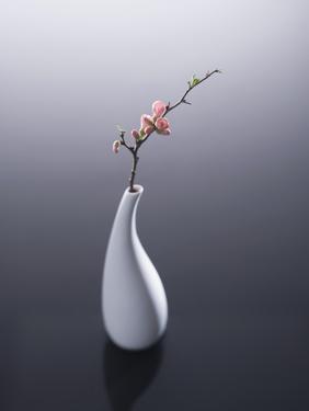 Cherry blossom in vase by John Smith