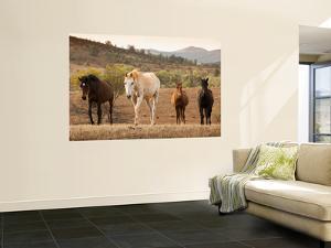 Wild Horses by John Sones