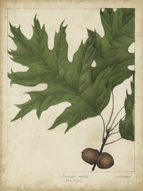 Oak Leaves and Acorns II by John Torrey