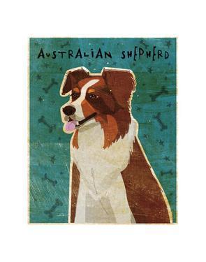 Australian Shepherd (Red) by John W. Golden