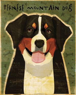 Bernese Mountain Dog by John W. Golden