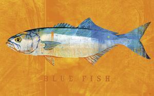 Bluefish by John W. Golden