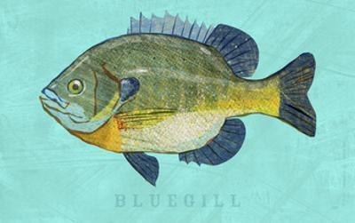 Bluegill by John W. Golden