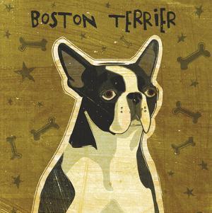 Boston Terrier (square) by John W. Golden