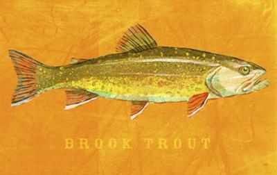 Brook Trout by John W. Golden