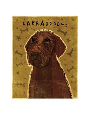 Chocolate Labradoodle by John W. Golden