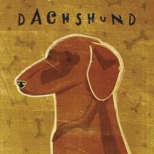 Dachshund (red) (square) by John W. Golden