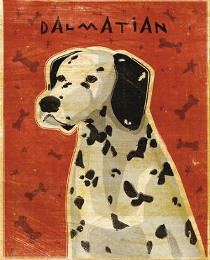 Dalmation by John W. Golden