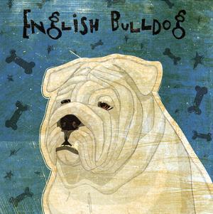 English Bulldog (square) by John W. Golden