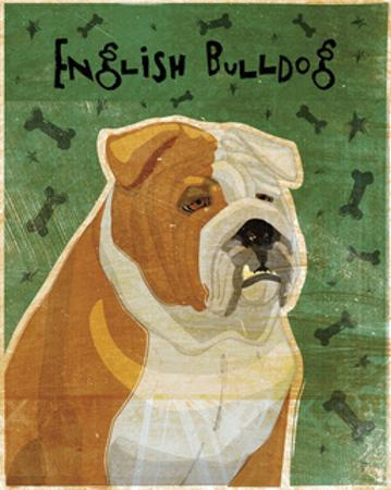 English Bulldog (tan and white) by John W. Golden