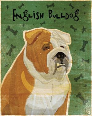English Bulldog (tan and white) by John W. Golden