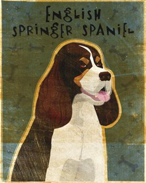 English Springer Spaniel (tri-color) by John W. Golden