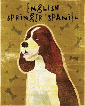English Springer Spaniel by John W. Golden