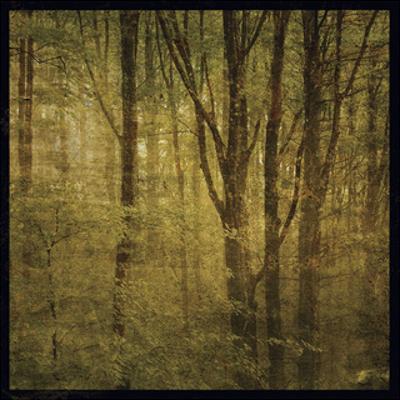 Fog in Mountain Trees No. 2 by John W. Golden