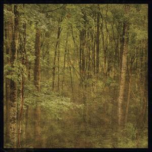 Fog in Mountain Trees by John W. Golden
