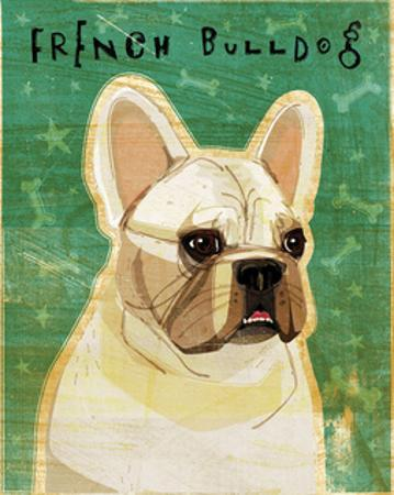 French Bulldog (White) by John W. Golden