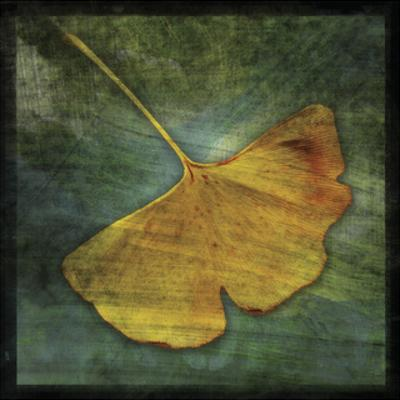 Gingko 3 by John W. Golden