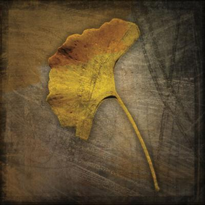 Gingko by John W. Golden