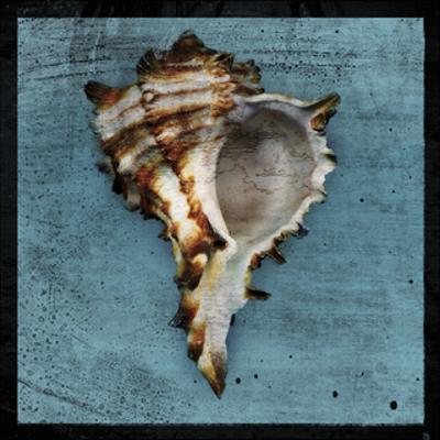Horned Whelk by John W. Golden