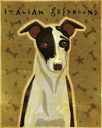 Italian Greyhound (Black & White) by John W. Golden