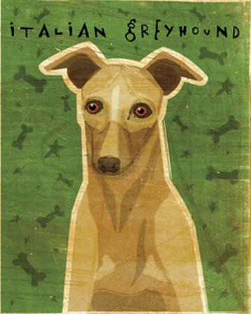 Italian Greyhound (Fawn) by John W. Golden