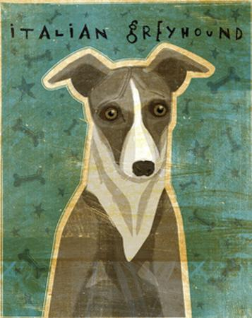 Italian Greyhound (White & Grey) by John W. Golden