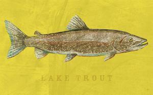 Lake Trout by John W. Golden
