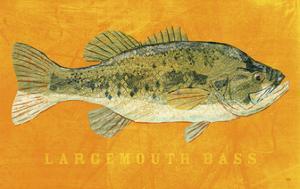 Largemouth Bass by John W. Golden