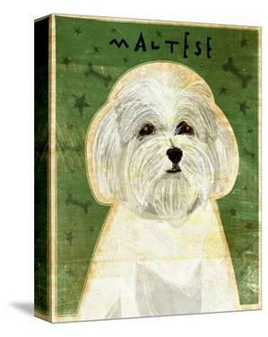Maltese by John W. Golden
