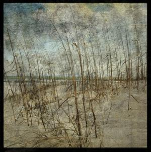 Masonboro Island No. 6 by John W. Golden