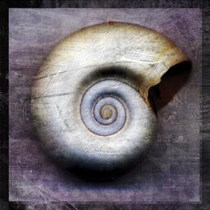 Moon Snail by John W. Golden