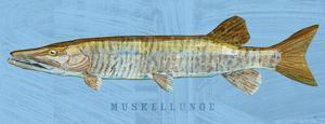 Muskellunge by John W. Golden