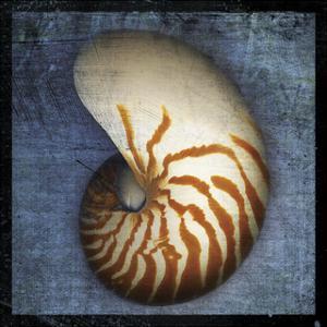 Nautilus by John W. Golden