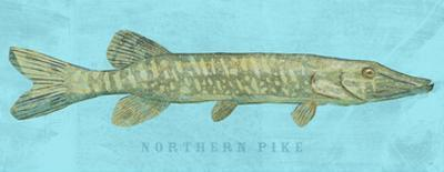 Northern Pike by John W. Golden