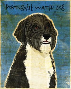 Portuguese Water Dog by John W. Golden