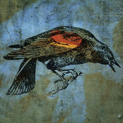 Red Wing Blackbird No. 1 by John W. Golden