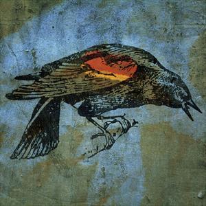 Red Wing Blackbird No. 1 by John W. Golden