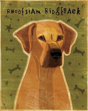 Rhodesian Ridgeback by John W. Golden