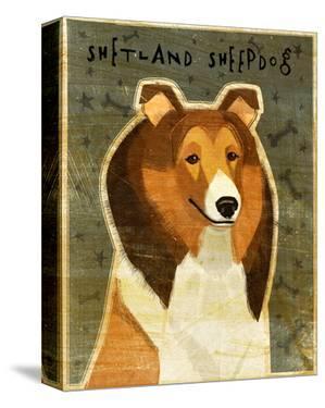 Shetland Sheepdog by John W. Golden