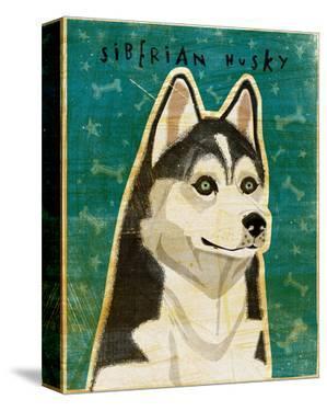 Siberian Husky by John W. Golden