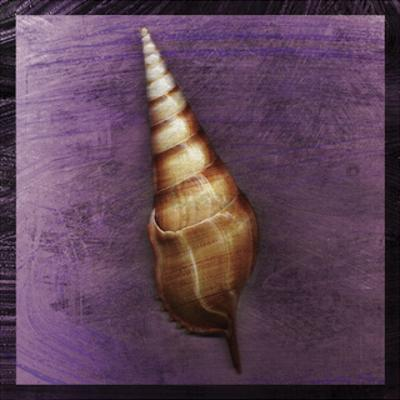 Tibia Shell by John W. Golden