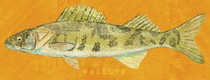 Walleye by John W. Golden