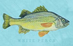 White Perch by John W. Golden