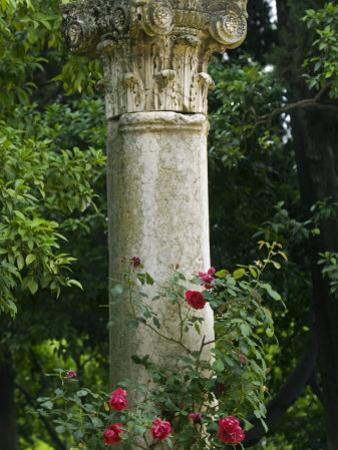 Andalucia, Seville, A Classical Column Surrounded by Roses in Gardens of Alcazar Palace, Spain by John Warburton-lee
